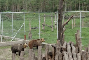 Two rescued bears in Hungarian bear sanctuary