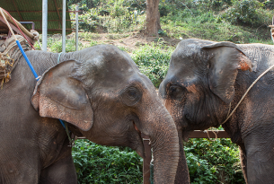 Travel associations are ignoring animal cruelty at wildlife attractions