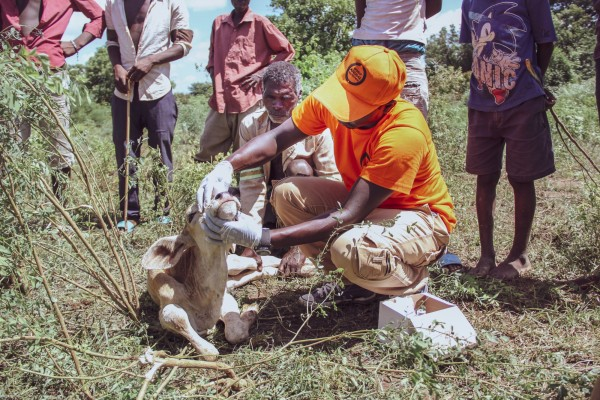 Our team tending to animals during the Malawi disaster