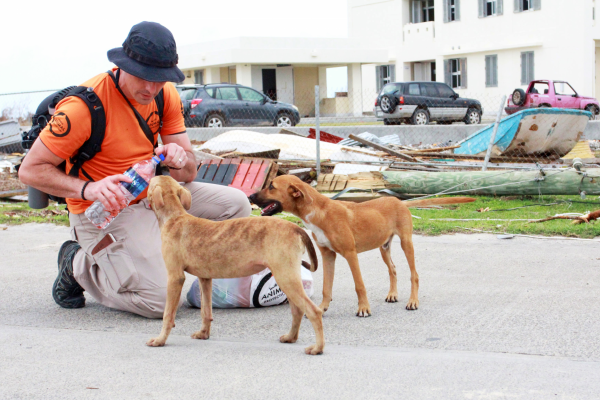 World Animal Protection team member giving dogs water after Hurricane Irma