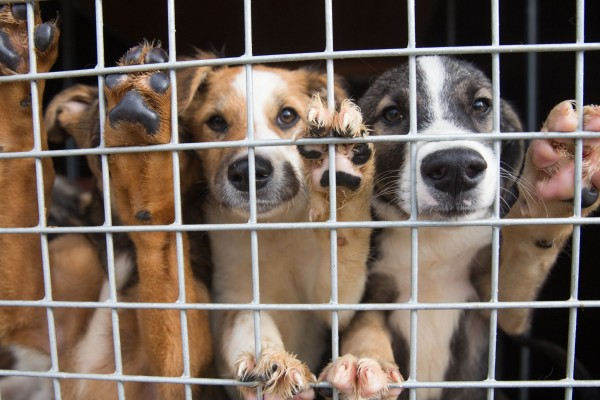 Dogs at a shelter in Brasov that cares for and re homes hundreds of stray dogs