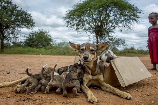 One million rabies vaccinations: moving communities to protect dogs