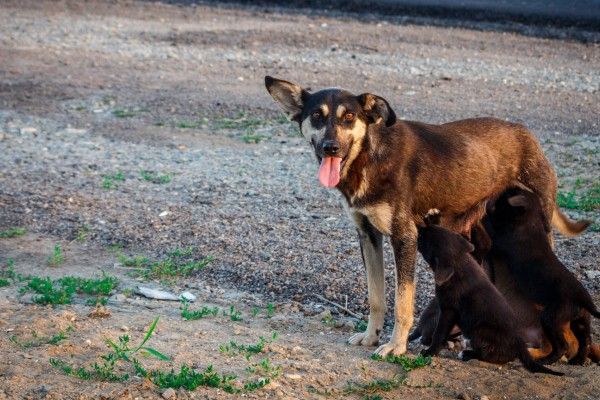 Stray mother dog and her puppies - World Animal Protection - Better lives for dogs